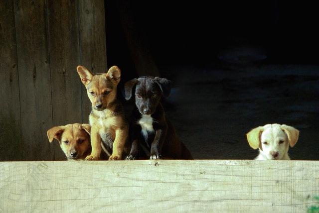 Jaka rasa psa jest odpowiednia dla mnie?